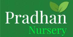 Pradhan Nursery